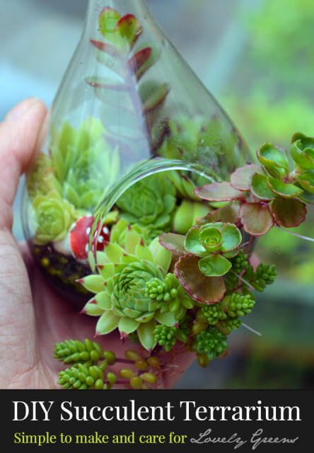 Instructions on how to make a Succulent Terrarium. Includes tips on plants, materials, and a video to show how to plant your terrarium #succulents #terrarium #succulentterrarium #gardendiy #gardeningproject #houseplants #plants #naturecraft