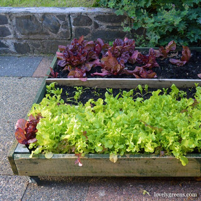 DIY Pallet planter for patios