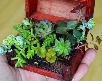 How to use any container to plant up a treasure trove of lush and delicate succulents #succulents
