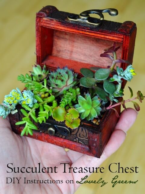 Use a small wooden chest and succulent cuttings to create this tiny planter