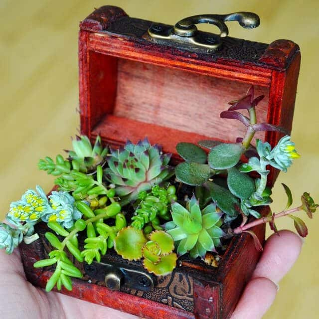 Succulent Treasure Chest DIY from Lovely Greens