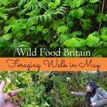 Wild Food Walk on the Isle of Man