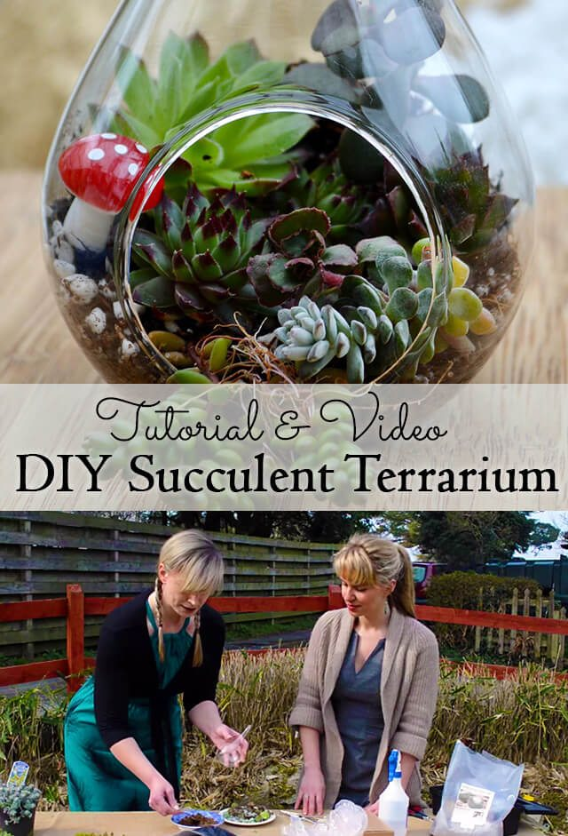 Succulent Terrariums are easy and inexpensive to plant up and make great gifts! In this diy tutorial, a confessed brown-thumb shows us how to make them from both purchased and salvaged materials! #succulents