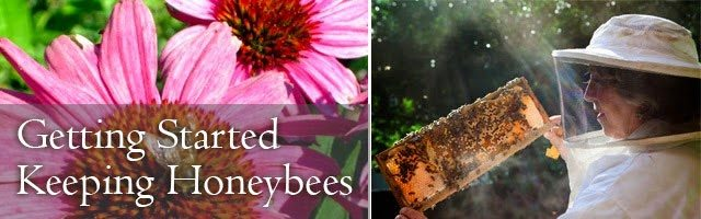 Getting started keeping Honeybees by Linda Tillman for Lovely Greens