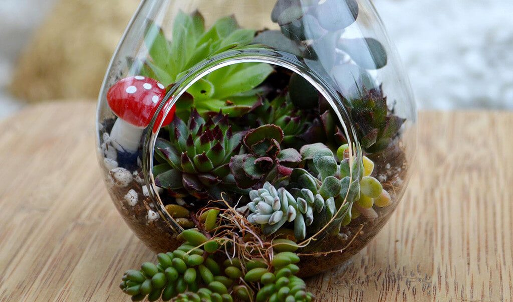 How to make a Succulent Terrarium