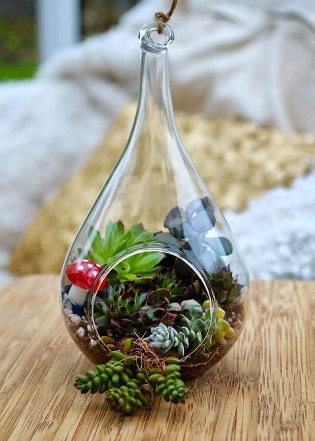 Video Tutorial: How to make a Succulent Terrarium