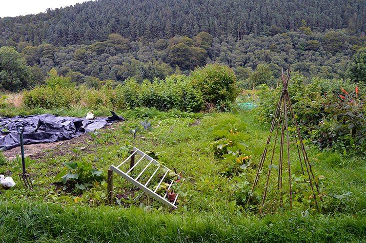 overgrown-garden