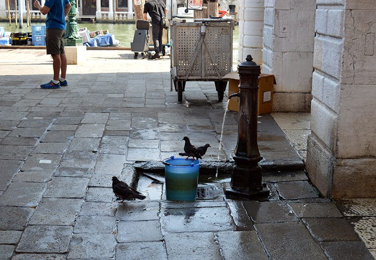Pigeons bathing. Photo diary of a solo trip to Venice, Italy, one of the most romantic cities in the world.