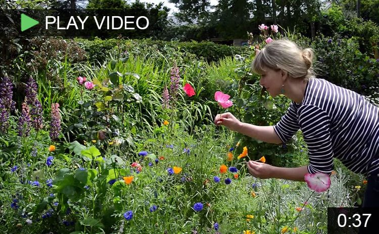 Video of Lovely Greens' Wildflower Cottage Garden