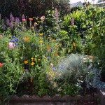 How to create a Wildflower Cottage Garden