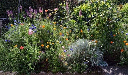 How to create a wildflower garden vibrant with color and buzzing with bees and butterflies. This diy shows monthly images of what the patch looks like from February to August.