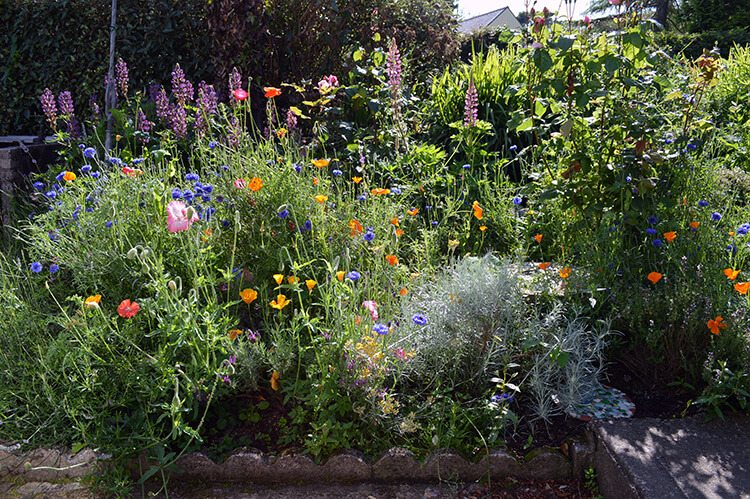 How to create a Wildflower Cottage Garden #flowergarden