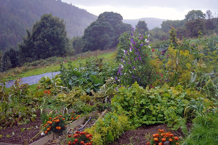 Tips for Starting a New Vegetable Garden