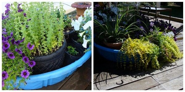 How to be a Lazy Gardener: 22 Tips to save you time, effort, and money in the garden. Pictured here: put potted plants in a kiddie pool filled with water while you're on vacation.