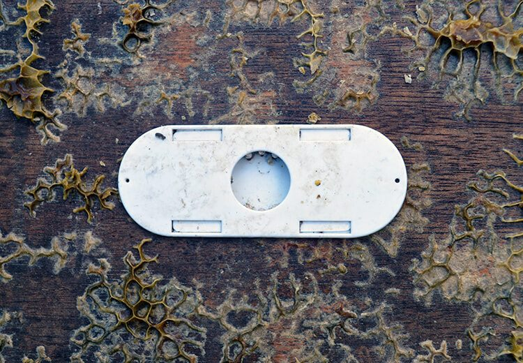 This is a Bee Escape and it's the mechanism in a 'Clearing Board' that allows bees to escape but not re-enter the part of the hive you're trying to section off.