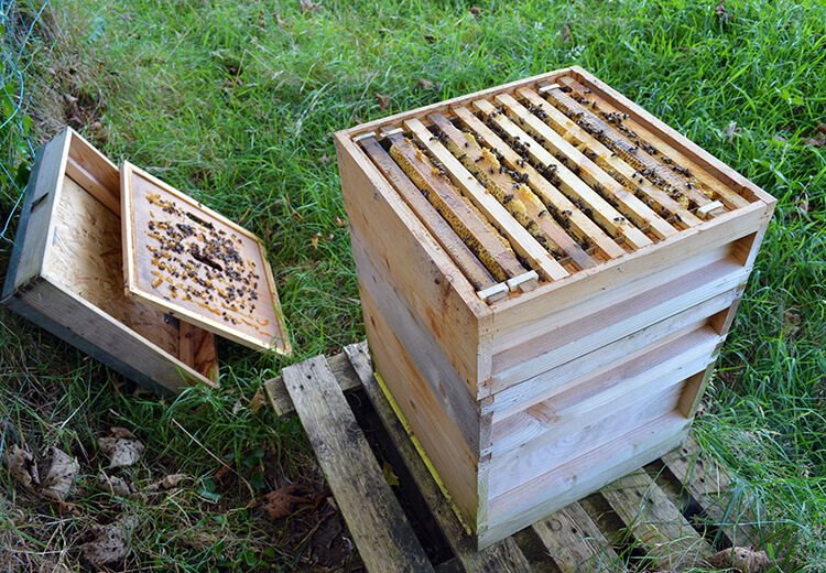 Beekeeping on the Isle of Man with Lovely Greens
