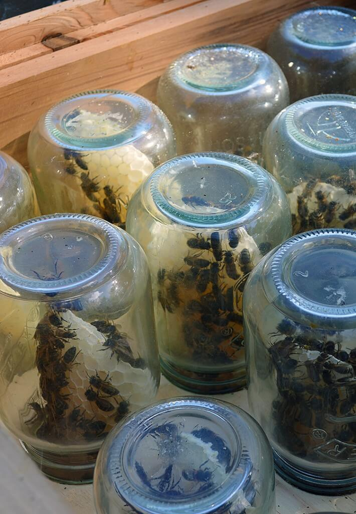 Beekeeping tip: How to encourage honeybees to build honeycomb inside glass jars. via Lovely Greens