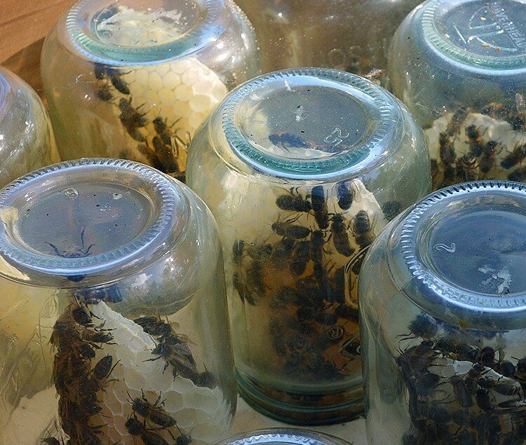 Beekeeping tip: How to encourage honeybees to build honeycomb inside glass jars. via Lovely Greens