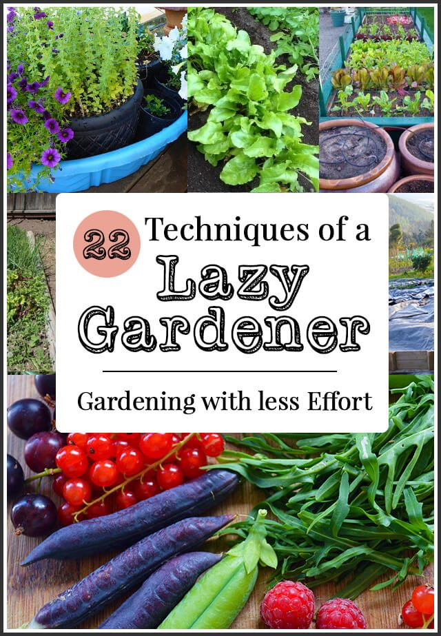 How to be a Lazy Gardener: 22 Tips to save you time, effort, and money in the garden.