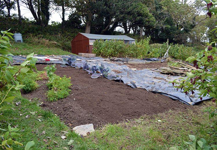 Planning a summer vegetable garden - perennial crops, unusual varieties, creating a sowing calendar