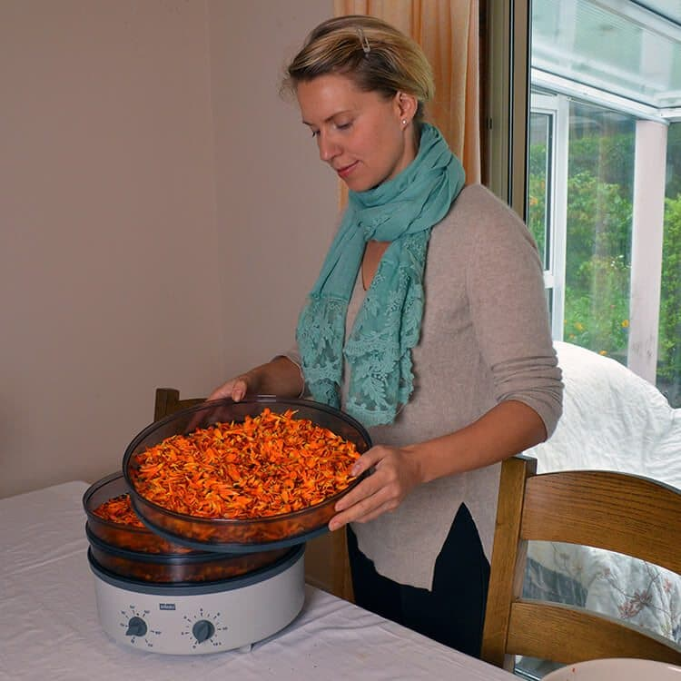 How to grow and use Calendula Flowers in Beauty & Cooking: Calendula petals are a golden edible flower that are also great for use in beauty products and herbal remedies. Pictured: how to dry the fresh petals