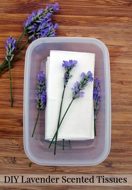 Lavender Scented Tissues – Instead of purchasing tissues scented with perfumes, layer tissues in a sealed container with fresh lavender flowers. Leave them for at least two weeks for maximum absorption of essential oils. These tissues will give a boost of calming aromatherapy each time they're used to blow your nose #coldremedy #lavenderidea
