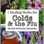 7 Herbs for Colds & Flu + how to use them