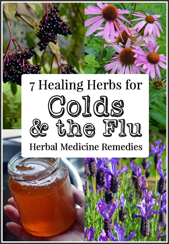 7 Healing Herbs for Colds and the Flu and how to use them