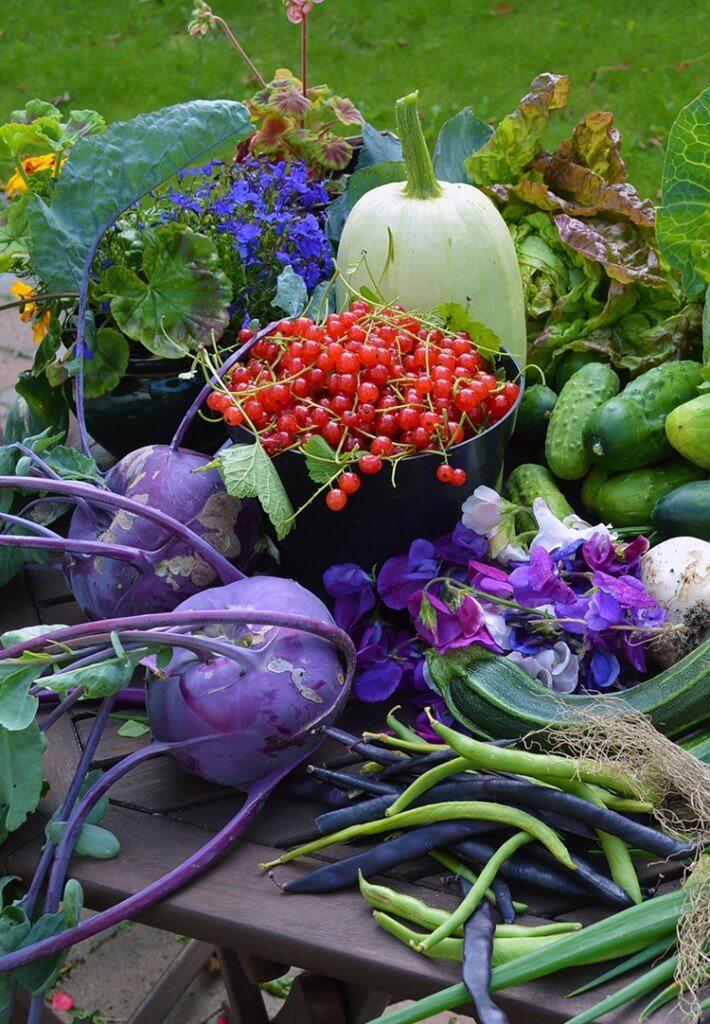 Planning this year's Vegetable Garden