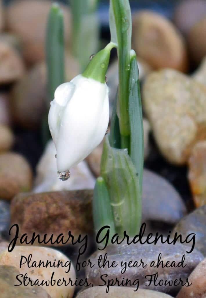 The Allotment Garden & Honeybees in January