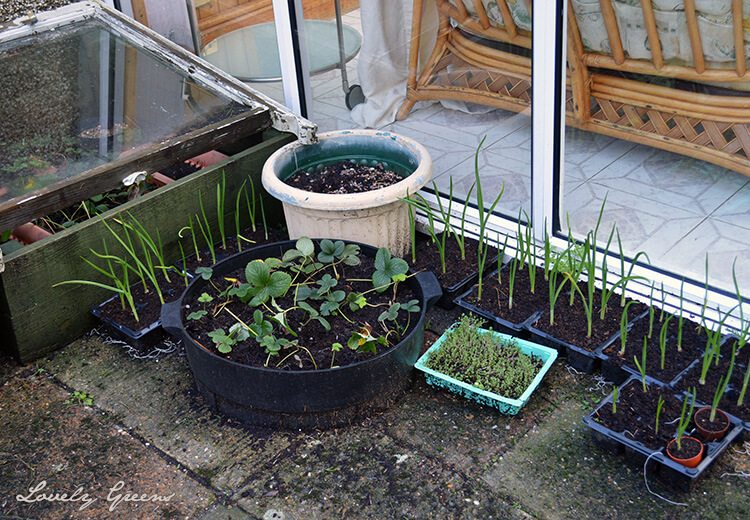 Gardening in January: Flowering bulbs, a soggy allotment, and winter gardening and beekeeping tasks