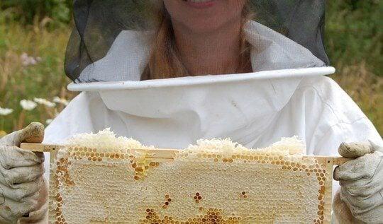 Beginners Beekeeping Class: learn how to keep honeybees on the Isle of Man