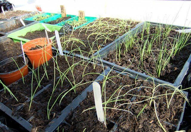 20 Winter garden projects for the vegetable garden including the earliest seeds to sow, forcing rhubarb, recycled garden projects, pruning, and more #gardeningtips #vegetablegarden #homegarden #allotment #diygarden