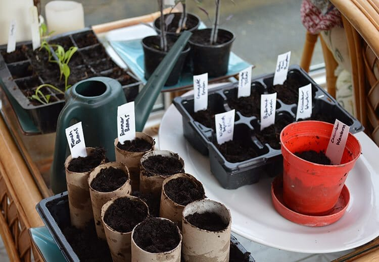When should I start Sowing Seeds? A guide last frost dates for your zone and which seeds can be sown the earliest #vegetablegardening #lovelygreens #gardening