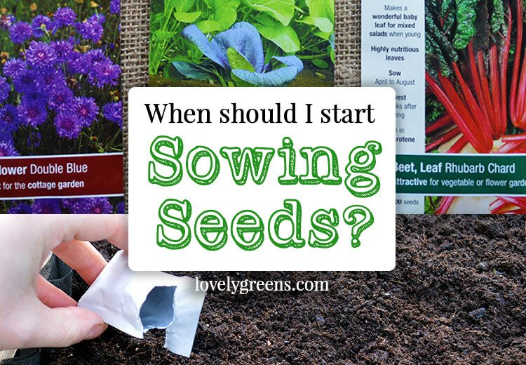 When should I start sowing seeds?