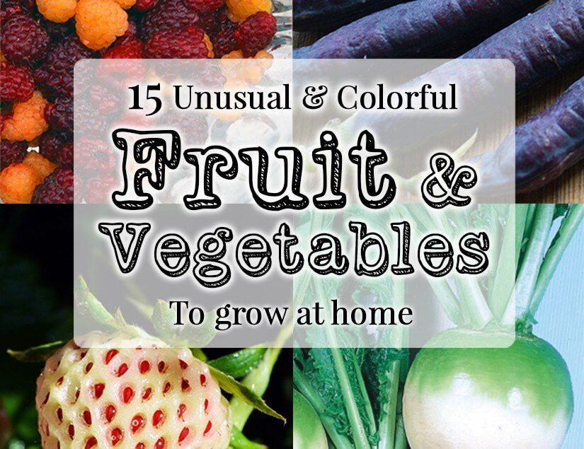 15 Unique fruits & vegetables to grow this year: from pink radishes to white strawberries, these unusual varieties will beautify your garden and your plate