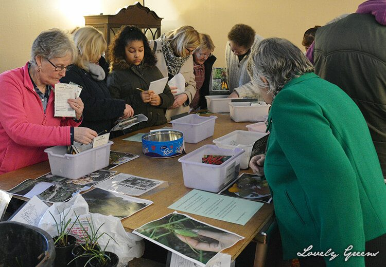 12 Tips on Organizing a Seed Swap - an event where gardeners share seeds and plants for free.