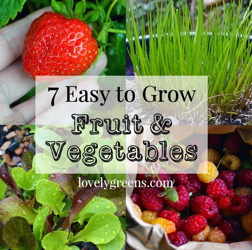 7 Easy To Grow Fruits & Vegetables