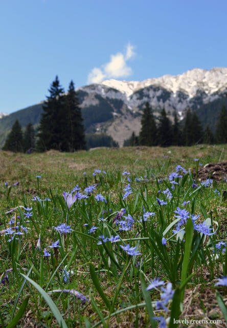 Walking and hiking through the villages and mountain trails of the Piatra Craiului national park in Romania. An area of natural beauty and a place where traditional farming life still exists to this day.
