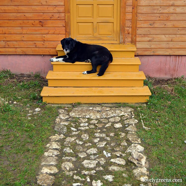 Dog sleeping on the steps of a traditional cottage: Farming and simple living in the Romanian hills inside the Piatra Craiului national park