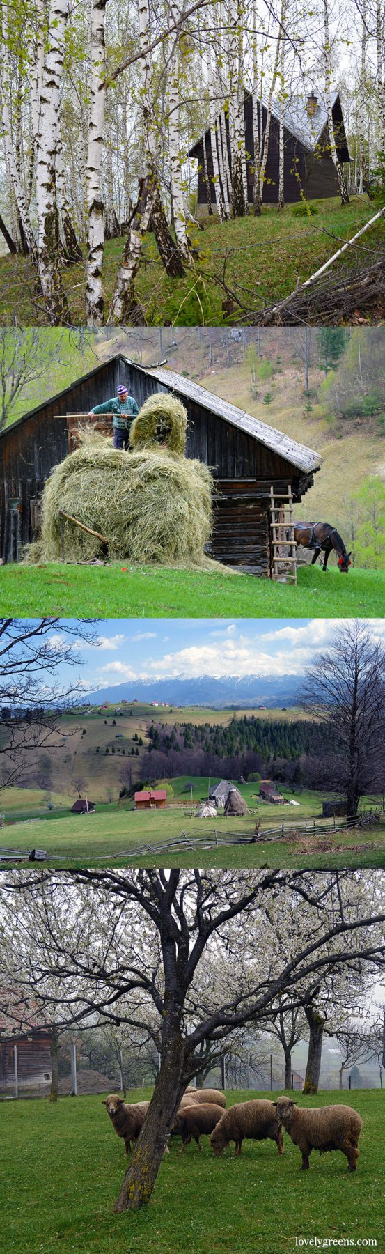 Traditional farming and simple living in the Romanian hills inside the Piatra Craiului national park