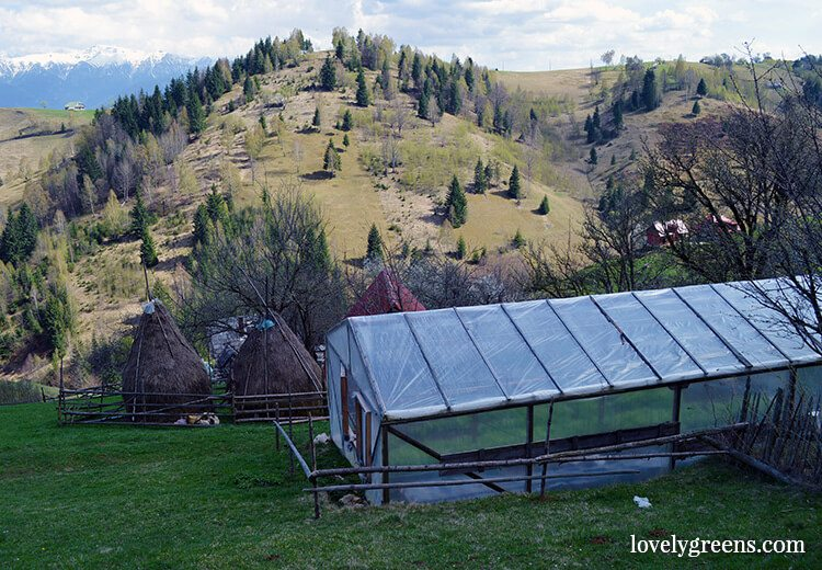 Haystacks and Greenhouse: Traditional farming and simple living in the Romanian hills inside the Piatra Craiului national park