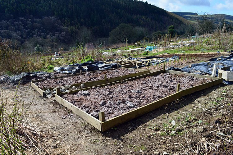 Mushroom compost spread over the two raised beds.