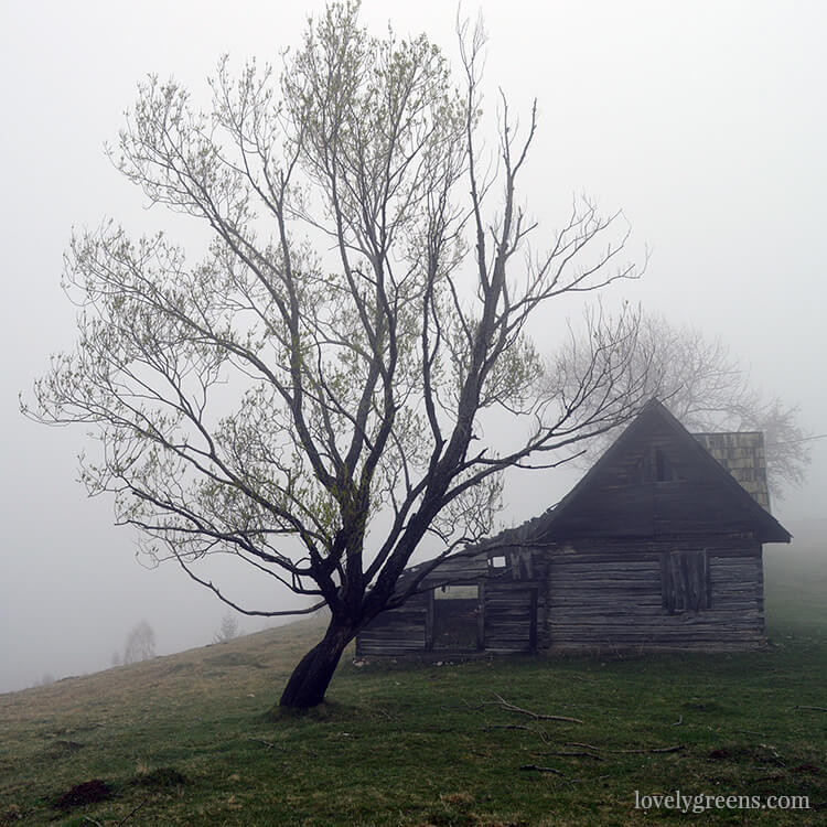 Misty cottage: Traditional farming and simple living in the Romanian hills inside the Piatra Craiului national park