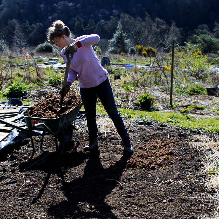 The Allotment Garden in April - early potatoes, Egyptian Walking Onions, the greenhouse, and what's growing