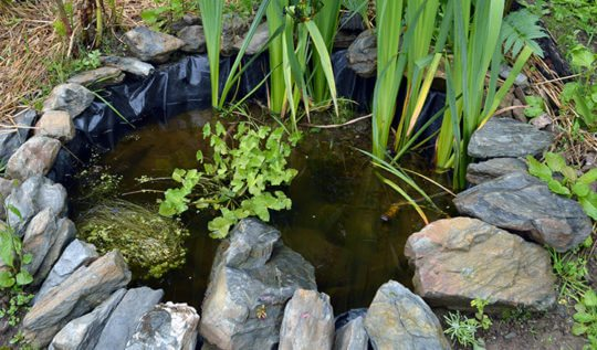 How to build a small wildlife pond in the garden