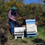 Roger Patterson inspects my Honeybees