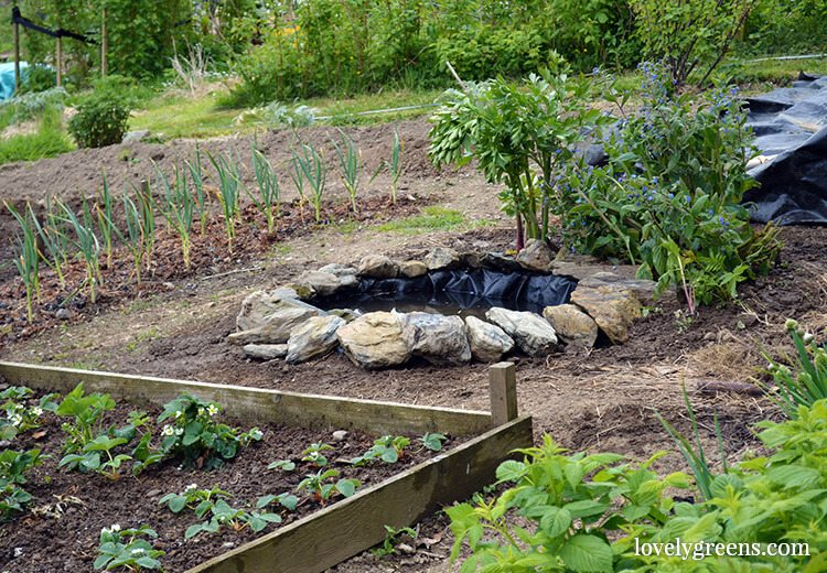 Building a wildlife pond in the vegetable garden garden for Making a garden pond