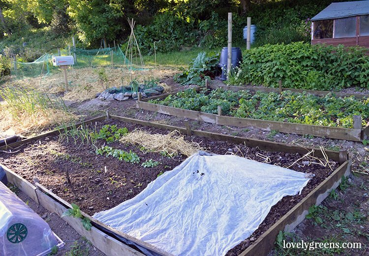 The Vegetable Garden in early June: Mulching with straw, Wildlife Pond update, installing a Garden Mailbox, getting sunburned, and what's growing.