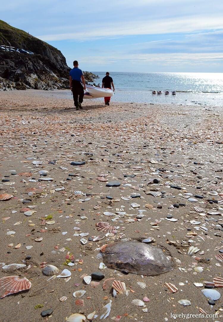 Jellyfish & Seashells on Fenella Beach